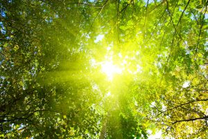 85027__the-rays-of-the-sun_p